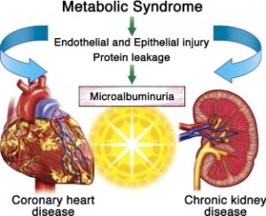 Kidney Disease, Another Complication Of Metabolic Syndrome