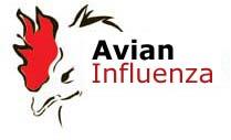 Avian Flu Threat Exaggerated