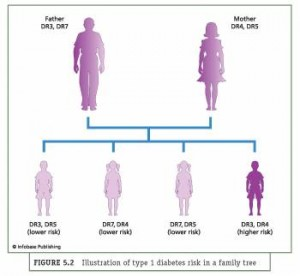 Gene Identification Helps To Screen for Diabetes Risk Of Juvenile Diabetes (type 1 diabetes)