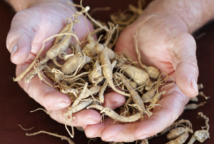 Ginseng Lowers Risk For Common Cold