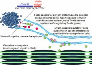 MS Vaccine Breakthrough