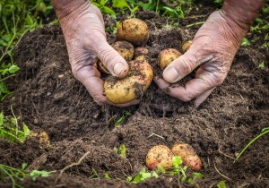 Health Depends on Healthy Soil