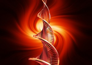 Life Expectancy Linked To Gender And Stem Cells