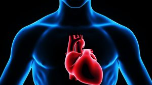 Heart Health Improves With Hormone Replacement