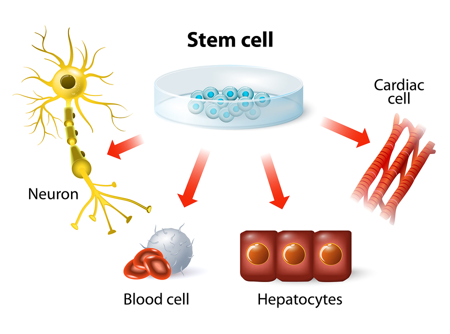 Young Heart Stem Cells Can Cure Old Hearts Medical Articles By Dr Ray