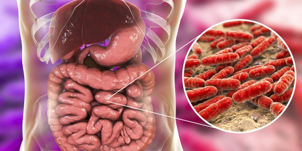 Gut Bacteria Crucial To Healthy Aging