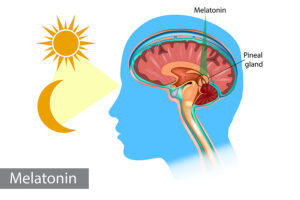 Melatonin Is More Than a Sleeping Aid