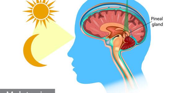 Melatonin Is More Than a Sleeping Aid
